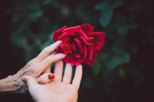 kädet ja kukka